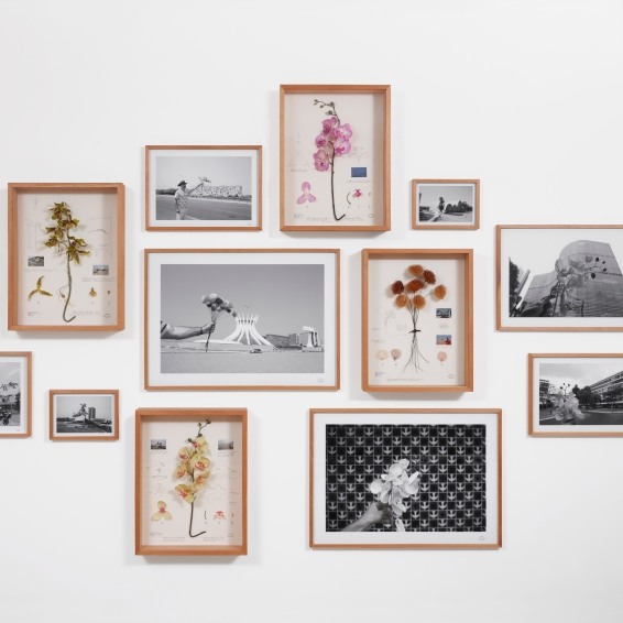 Alberto Baraya Estudos comparados modernistas 2011 photography, found objects and drawing on paper, 220 x 300 cm